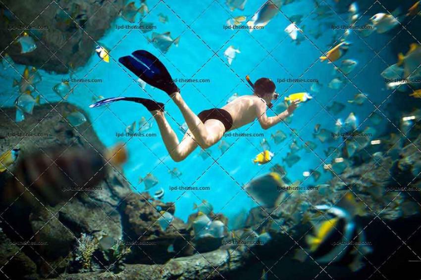 Snorkeler Diving Along