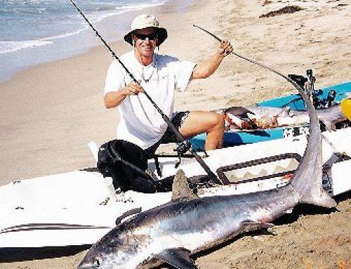 256# Common Thresher Shark